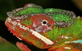 Chameleons wallpaper