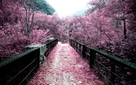 Cherry blossoms photography bridges depth of field selective wallpaper
