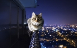 Cityscapes cats animals wallpaper