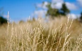 Closeup grass blurry depth of field wallpaper