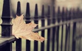 Closeup nature autumn leaves scenic macro gates wallpaper