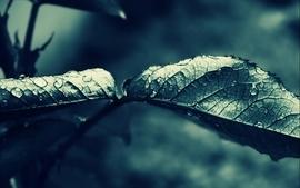 Closeup nature dark leaves macro drops wallpaper
