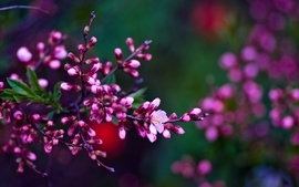 Closeup nature flowers plants macro wallpaper