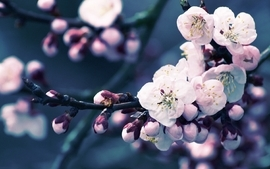 Closeup nature flowers spring wallpaper