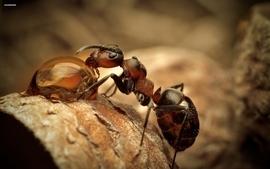 Closeup nature macro ant wallpaper