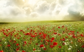 Clouds landscapes flowers meadows poppies wallpaper
