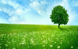 Clouds landscapes nature trees fields wallpaper