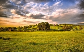 Clouds landscapes trees hdr photography countryside wallpaper