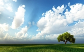 Clouds minimalistic trees grass outdoors wallpaper