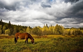 Clouds nature forest animals photography grass horses wallpaper