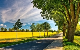 Clouds trees leaves wildlife fields path spring season roads wallpaper