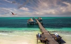 Cuba beach bird sea sand wallpaper