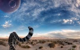 Desert cheetahs skyscapes wallpaper