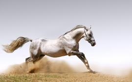 Desktop horses white horse wallpaper