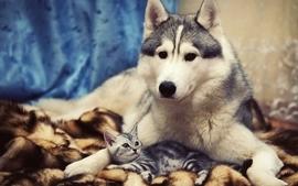 Dogs kittens wallpaper