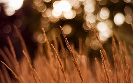 Fields bokeh wallpaper