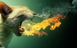 Fire spitting cat with smoke out of nose wallpaper
