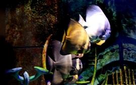 Fish 2 wallpaper