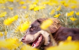 Flowers animals dogs pets wallpaper