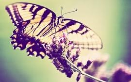 Flowers butterflies wallpaper