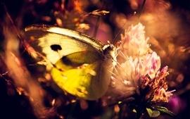 Flowers butterfly wallpaper
