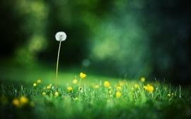 Flowers grass dandelions depth of field wild wallpaper