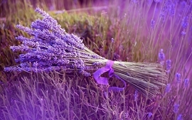 Flowers grass purple ribbons lavender bouquet purple flowers wallpaper