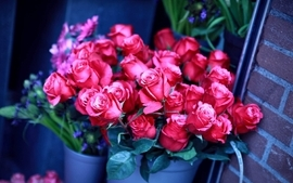 Flowers plants roses wallpaper