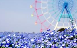 Flowers purple summer wallpaper