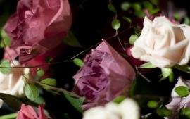 Flowers roses white flowers wallpaper