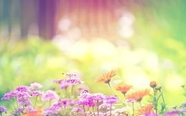 Flowers spring season bumblebee bright bombus wallpaper