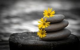 Flowers stones zen pebbles selective coloring wallpaper