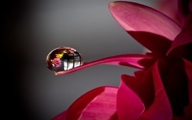 Flowers water drops wallpaper