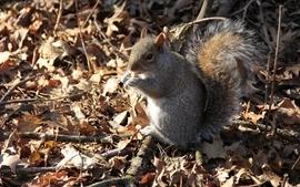 Forest animals squirrels wallpaper