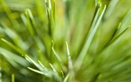 Grass 10 wallpaper