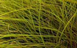 Grass 11 wallpaper