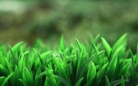 Grass 12 wallpaper
