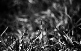 Grass 6 wallpaper