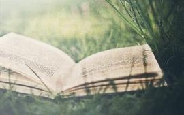 Grass books wallpaper