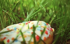 Grass donuts macro sprinkles wallpaper
