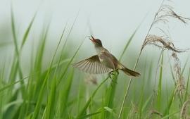 Grass eating birds wallpaper