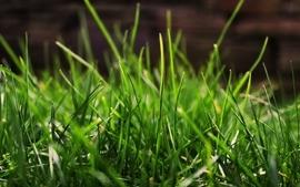 Grass macro 2 wallpaper