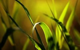 Grass plants depth of field wallpaper