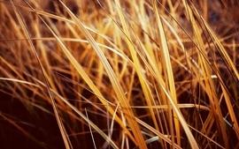 Grass plants wallpaper