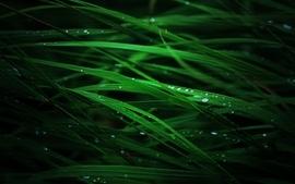 Grass water drops 2 wallpaper