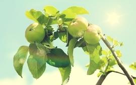 Green food apples branch wallpaper