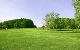 Green landscapes nature trees fields wallpaper