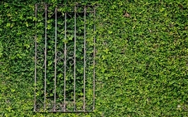 Green leaves gates wallpaper