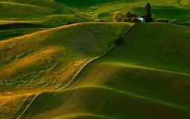 Green nature fields wallpaper