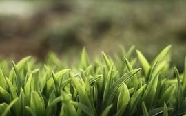 Green nature grass macro depth of field wallpaper